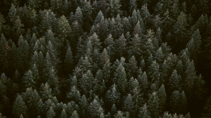 Tag des Schwäbischen Waldes