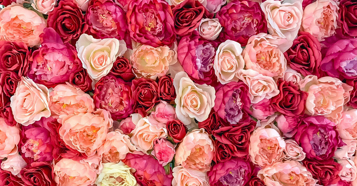 Ein Meer an Rosen